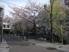 April 2009 (TakuUemura) Tags: tree river kyoto cherryblossom tt takasegawa kiyamachi