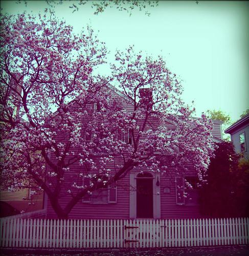 mugford street magnolia