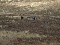 P5022546 (Ray McC) Tags: camping trees mountains west water way walking scotland rocks cattle sheep hills highland waterfalls loch westhighlandway hillwalking tyndrum lomand glenco lochlomand rowerdennan