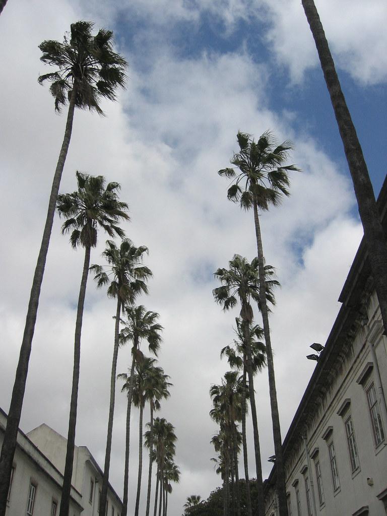 céu de Lisboa (30 de Abril de 2009) -5