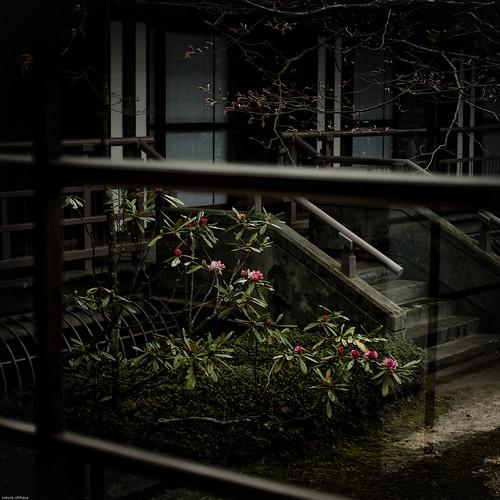 15188 :  Another Garden 2 -Kongobuji Temple #9-