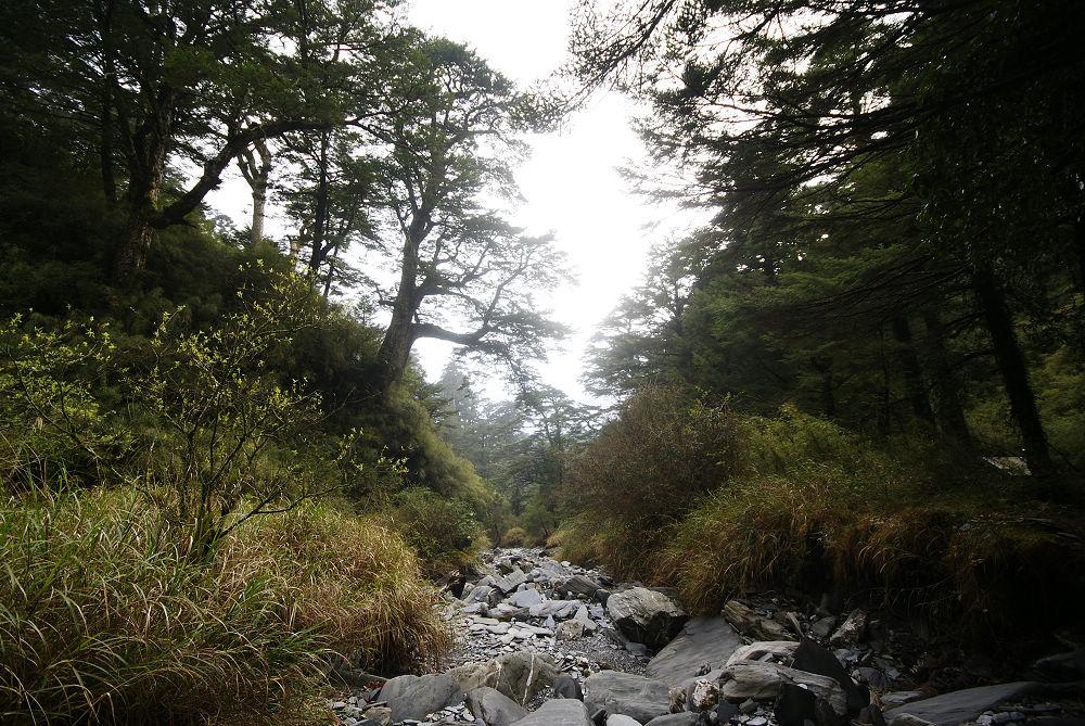 奇萊Day1-67 小溪溝