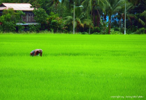 green....