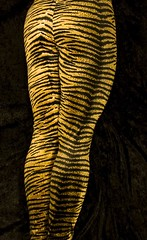 Tiger Print Tights (AnonymousArt) Tags: selfportrait black art me lines yellow fetish self print pattern legs artistic body stripes tiger leg shapes surreal tights human fabric material form tight exploration nylon spandex lycra leggings skintight enclosed encasement formfitting secondskin anonymousart