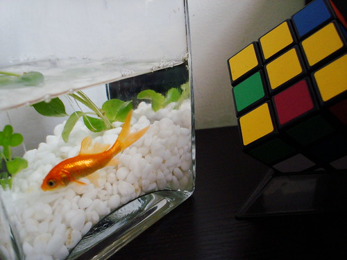 Paul the Fish and his Rubik Cube