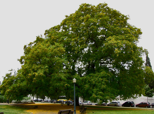 Árvores grandes, são grandes árvores.