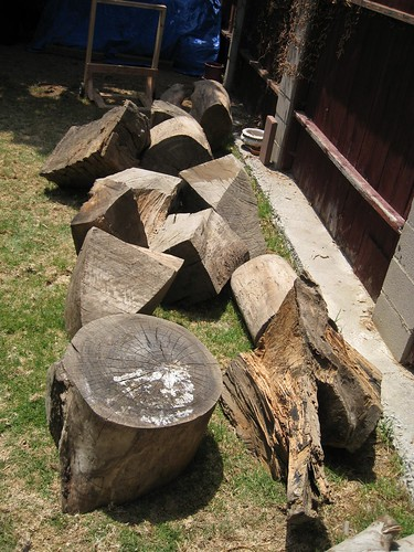 huge Eucalyptus logs