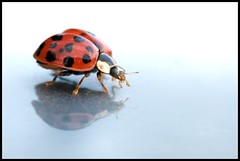 this way (jmauerer) Tags: macro closeup lady bug nikon mauerer jmauerer