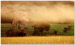 Trees In  Mist (Diogo Gasparetto) Tags: trees mist tree soe rvores nvoa platinumheartaward