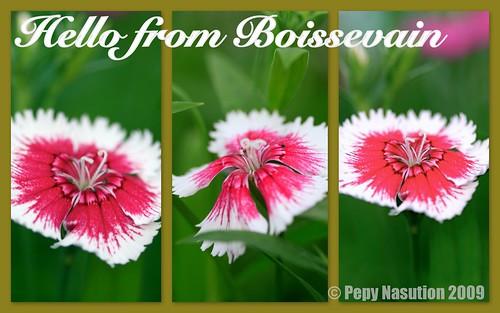 Hello From Boissevain
