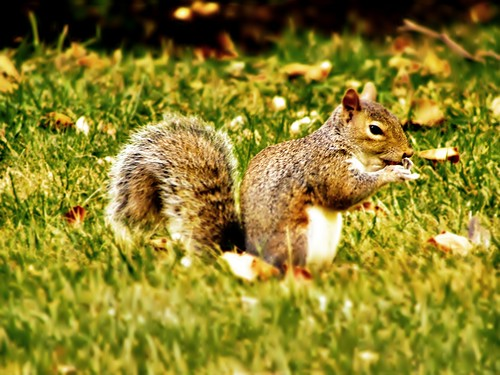 Squirrel 2 Edit