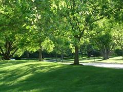 I see positive... (Talismania09) Tags: street sun green love beauty garden amazing maryland happiness riposo pace positive sole bethesda vento silenzio felicita tranquillita