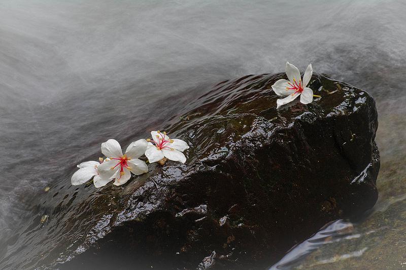 桐花心旅-光影水道
