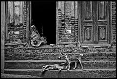 Forecasting retentivities (Sopnochora) Tags: dog women memory dhaka bangladesh oldbuilding savar blackwhitephotos birulia
