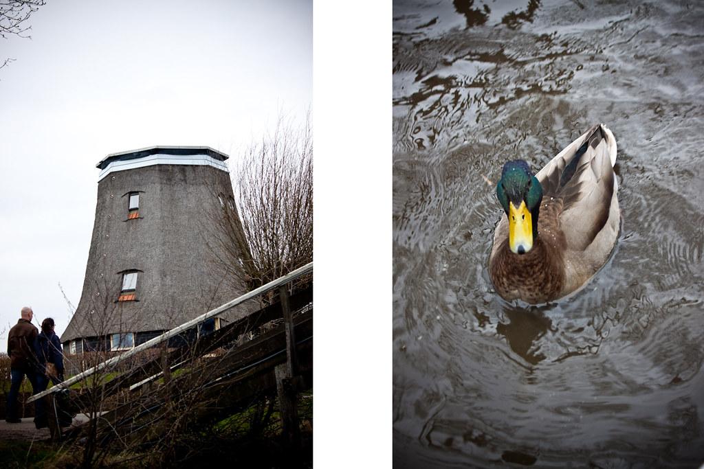 Windmill&Duck