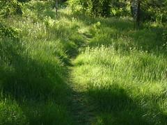 GREEN (Ken-Zan) Tags: light green home grass early path kenzan grnska morniglight sommarstig