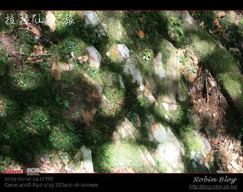 你拍攝的 20090110數位攝影_拉拉山外拍529.jpg。