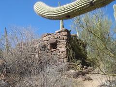 DSC03591 (Puggeroni) Tags: tucson saguaronationalpark