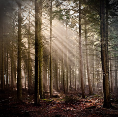 Woodland beams (Terry Yarrow) Tags: morning trees light england mist nature canon woodland landscape woods wildlife military atmosphere dorset ethereal beams sunbeams lulworth eos5d colorphotoaward platinumheartaward