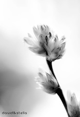 Welcome to my world (1davidstella) Tags: light bw flower love friend bokeh visualart blueribbonwinner welcometomyworld bej platinumphoto flickrdiamond citrit theunforgettablepictures goldstaraward abovealltherest alwaysexc passionateinspirations 4tografie