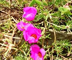 Flor I (Matheus Cremonese) Tags: pink brazil flores minasgerais verde brasil riodejaneiro cores natureza laranja quadro campo bola sinuca fazenda rvores vegetao terespolis moldura marfin matheuscremonese bilharsnooker
