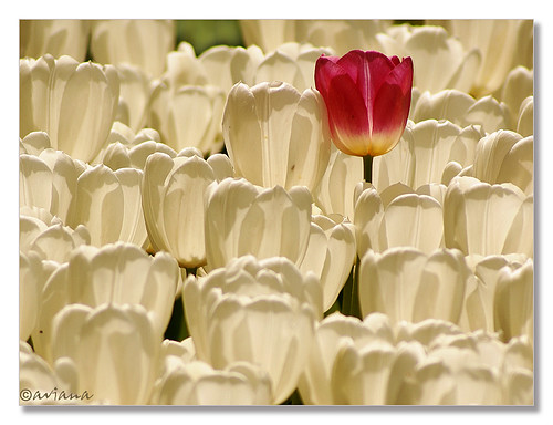 The courage to be different