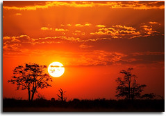 100,000 Views (Chad Galloway Photo) Tags: africa travel sunset tree nationalpark african sony safari views botswana chobe acacia settingsun 100000 africansunset a700