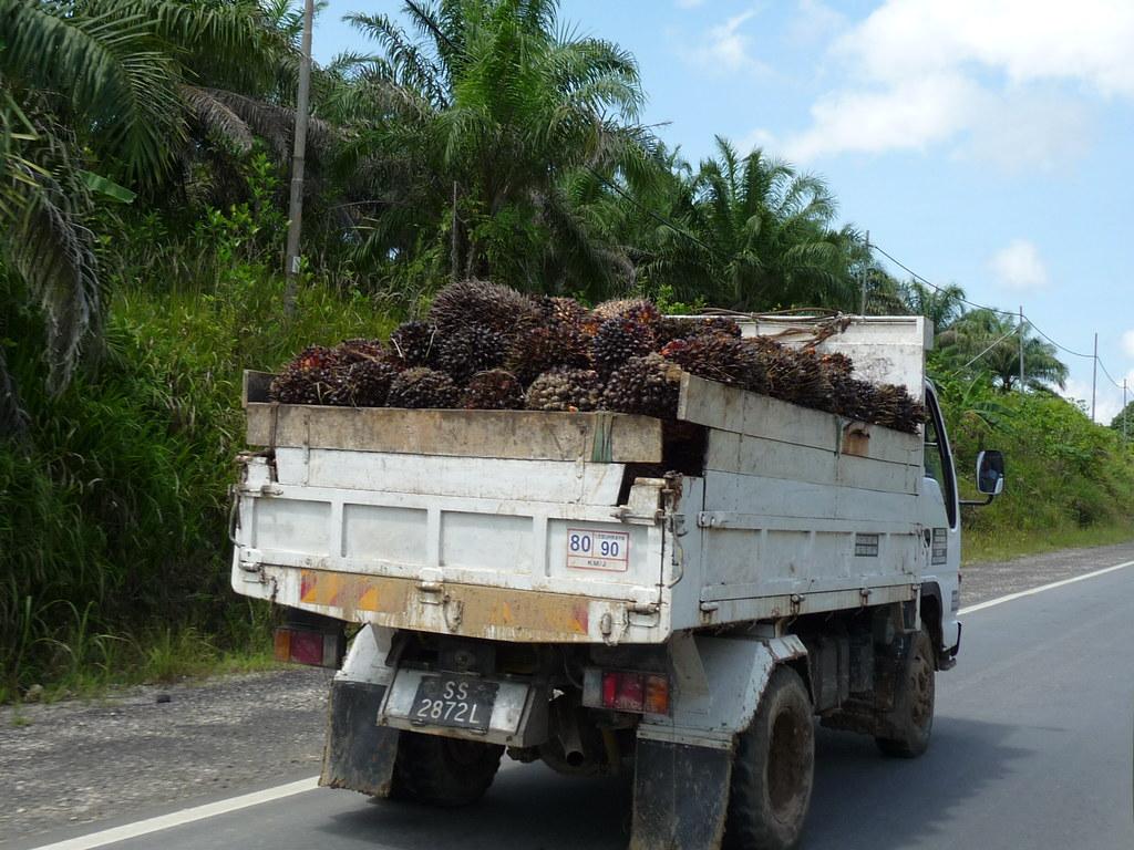 Palm Oil (6)