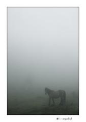 Behorra (ikertxi) Tags: caballo zb monte bizkaia niebla euskalherria iker mendia yegua lainoa zaldia mugarra behorra ikertxi olaetxea