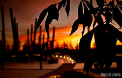 silhouette leaves (Chris Crisp) Tags: sunset red sky beautiful beauty leaves silhouette yellow warm bokeh dusk minneapolis cry drama canoneos50d