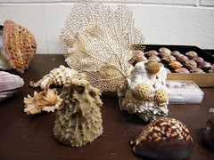 Natural History-Biology Dept 017 (The Green Medusa) Tags: coral fossil university shell science naturalhistory taxidermy biology curiosity relic wunderkammer specimens