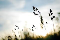Unspoken Eulogy (Rob Chiu) Tags: sunset childhood 50mm nikon alone location fields nostalgic d200 nikkor wiltshire chippenham 14af