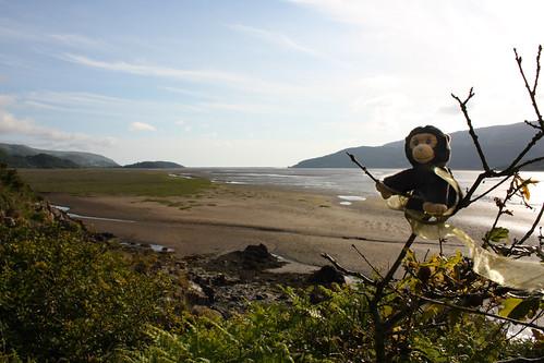 George suveys the Mawddach Estuary