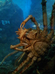 crabsnatank (angiegochis@ymail.com) Tags: acquarium shedd