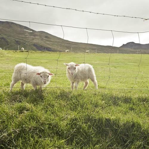 ewe and I