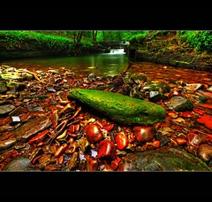 """ PONT MELIN FACH "" (Wiffsmiff23) Tags: red green wet rain rock misty moss rocks stream lagoon pebbles waterfalls bling brecon manfrotto hoya complicated pontneddfechan nd8 platinumphoto pontmelinfach"