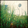 Wading through the weeds (khai_nomore) Tags: morning wild slr 120 film nature trekking mediumformat hills negative chrome scanned zenith rm singlecoat hasselblad500c fujifilmpro160s autaut carlzeiss80mmf28