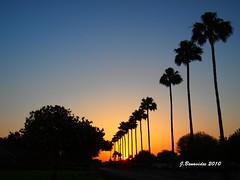 Sunset1 (jbenavx) Tags: sunset sky sun color silhouette texas perspective olympus mcallen e620