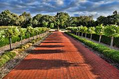 Grant Burge Winery  Australia (mtetcher) Tags: travel nikon wine south australia winery topaz adjust d90 18200vr