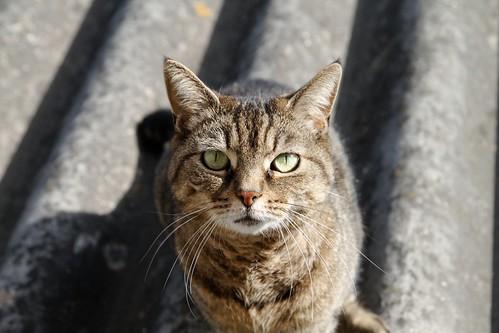 La chatte sur un toit ... ensoleillé