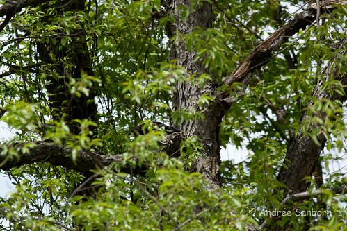 Peeking Crow-2.jpg