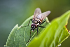 (andriuXphoto) Tags: nature insect fly ne muse taip ne6 ne4 ne5 ne2 ne3 taip2 taip5 taip7 taip10 taip3 taip4 taip6 taip8