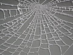 spider on winter (sonja.sgobbo) Tags: schnee winter white snow spider frost spinne eis nahaufnahme netz spinnennetz abstrakt weis