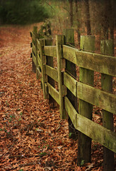crooked fence (Tina Lee Studio) Tags: winter fall leaves canon fence textures cubism goldstaraward beautyunnotice