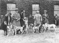 A group of Dalmatians and their owners before the judges, 1920s or 30s / by Sam Hood