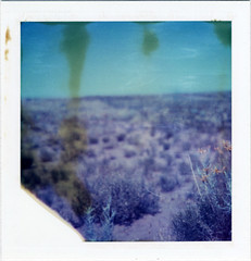 (moominsean) Tags: flowers summer arizona blur polaroid desert heatwaves navajonation squareshooter2 type88 type80 expired1996 colorpackiifront