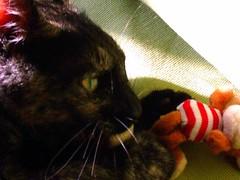 Meg (colindaca) Tags: gatto occhio gioco