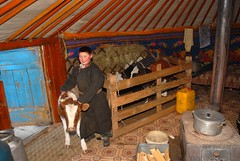 MONGOLIAN KID (Claude  BARUTEL) Tags: winter cold cow wooden kid mongolia yurt steppe ger