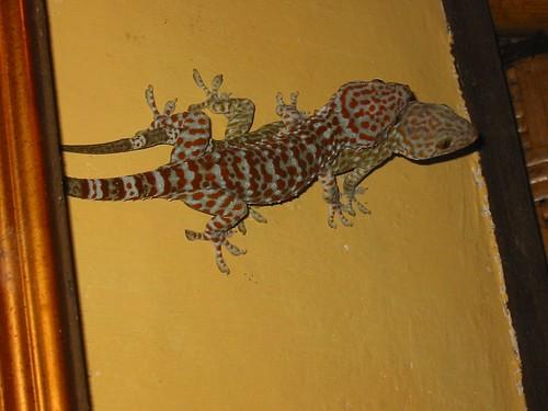 De gecko's hadden er zin in...