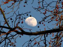 MOONlight by Day (dlco4) Tags: blue friends sky moon tree nature day searchthebest moonlight lunar cubism iloveit blueribbonwinner supershot addictedtoflickr mywinners platinumphoto anawesomeshot citrit goldstaraward dragongold worldsmoststunningshot micartttworldphotograpy